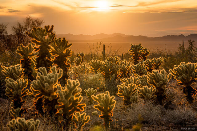 Arizona, Kofa National Wildlife Refuge, cholla, Kofa Mountains