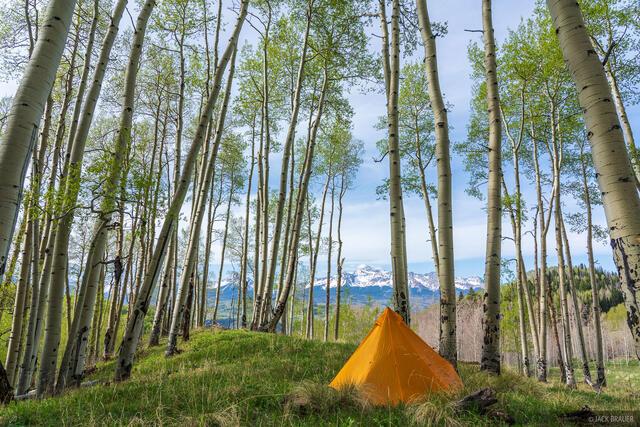 Colorado, San Juan Mountains, 14er, aspens, Wilson Peak