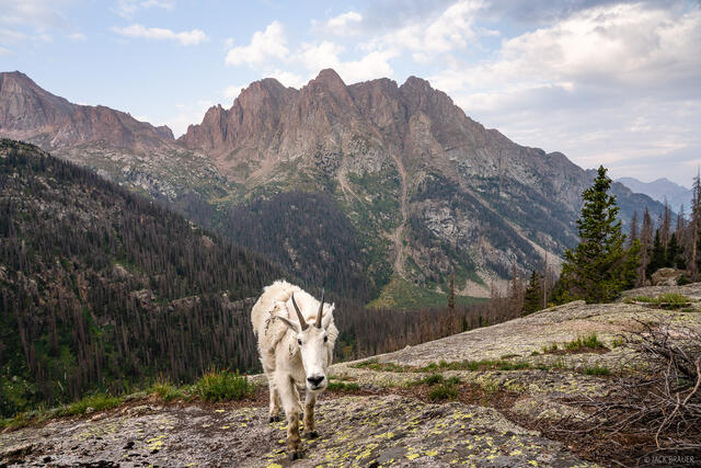 Animas Mountain, Colorado, Needle Mountains, San Juan Mountains, Weminuche Wilderness, mountain goat