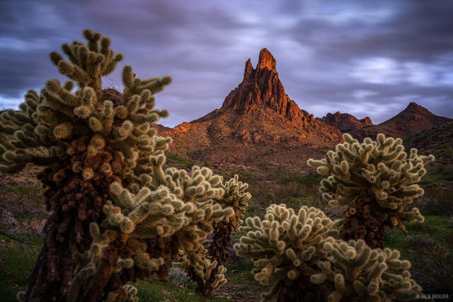 Arizona, Black Mountains, Cathedral Rock, cactus, cholla, Mojave Desert