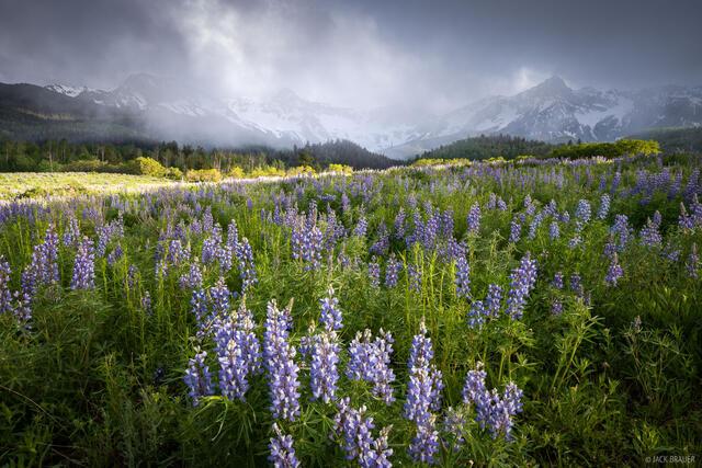 Colorado, Mears Peak, San Juan Mountains, Sneffels Range, wildflowers, lupines