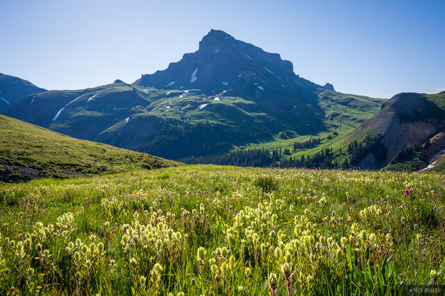 Colorado, San Juan Mountains, Uncompahgre Peak, Uncompahgre Wilderness, wildflowers