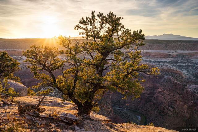 Colorado, Dolores River, pinyon, sunset, Dolores River Canyon Wilderness Study Area