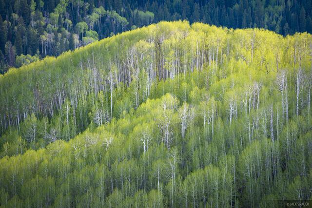 Cimarrons, aspens, Colorado