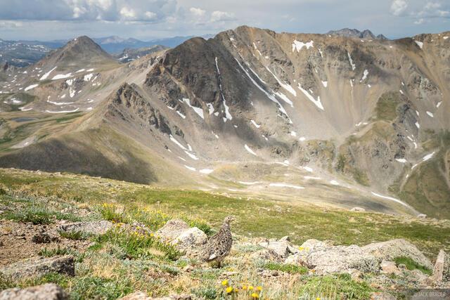 Collegiate Peaks Wilderness, Colorado, Mount Belford, Sawatch Range, ptarmigan, 14ers, Missouri Mountain