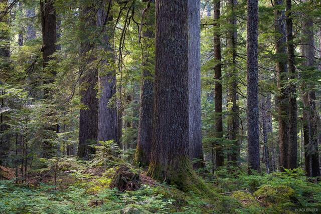 Glacier Peak Wilderness, Washington, forest, Cascades