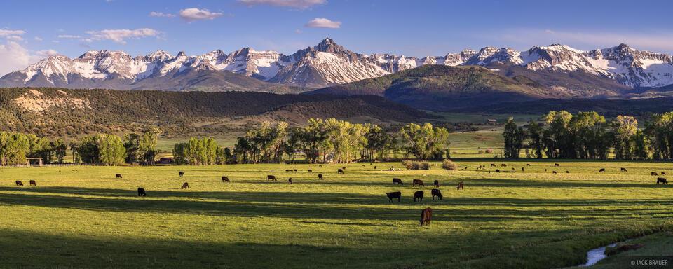 Colorado,San Juan Mountains,Sneffels Range, Pleasant Valley, panorama, cattle, Ridgway