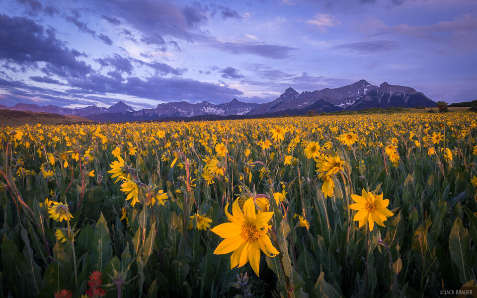 Colorado,San Juan Mountains,Sneffels Range,wildflowers, sunset, July