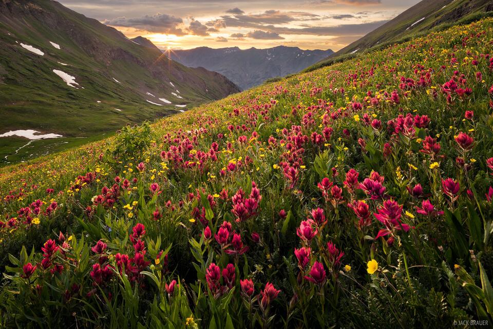 Colorado,San Juan Mountains,Stony Pass,wildflowers, July
