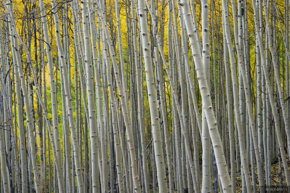 Colorado,San Juan Mountains, aspens