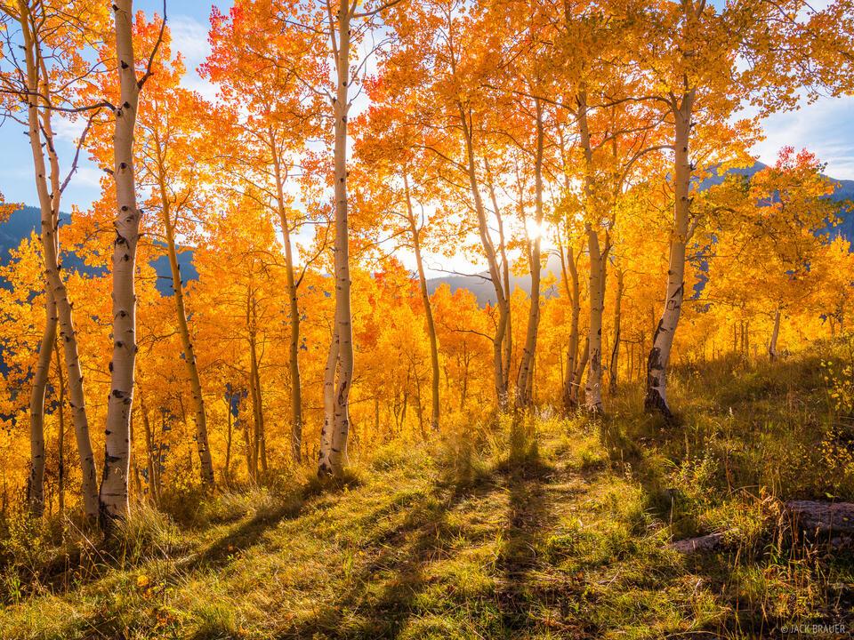 Colorado,Crested Butte,aspens, September