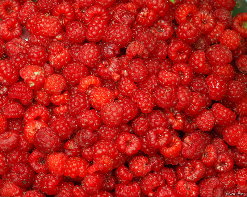raspberries, Colorado, wild raspberries, photo