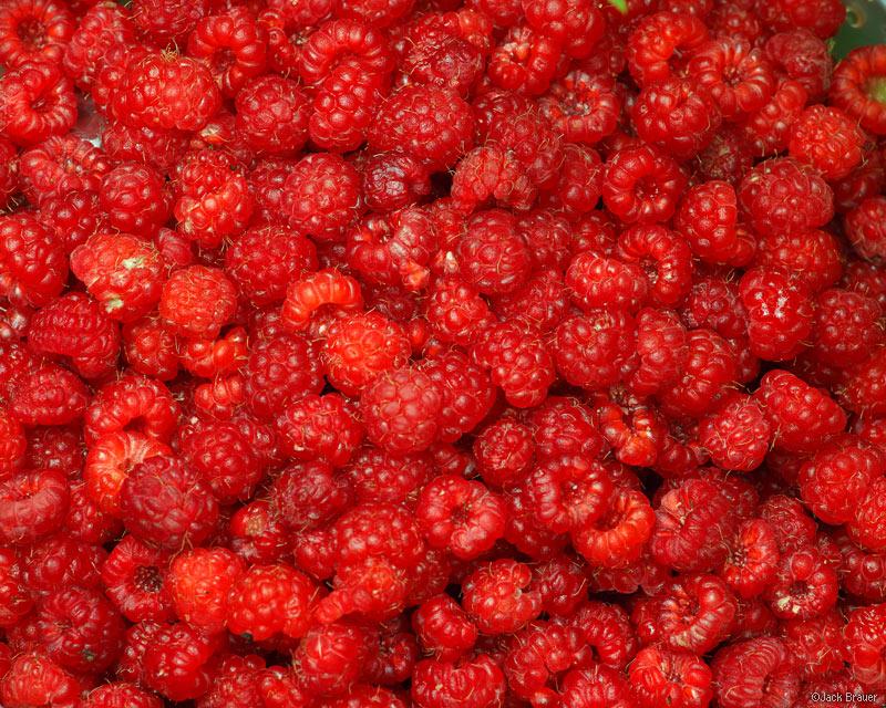 raspberries, Colorado, wild raspberries, photo