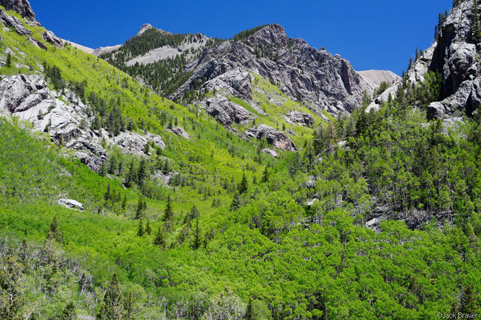 Sangre de Cristo, Colorado, aspens, North Crestone, June