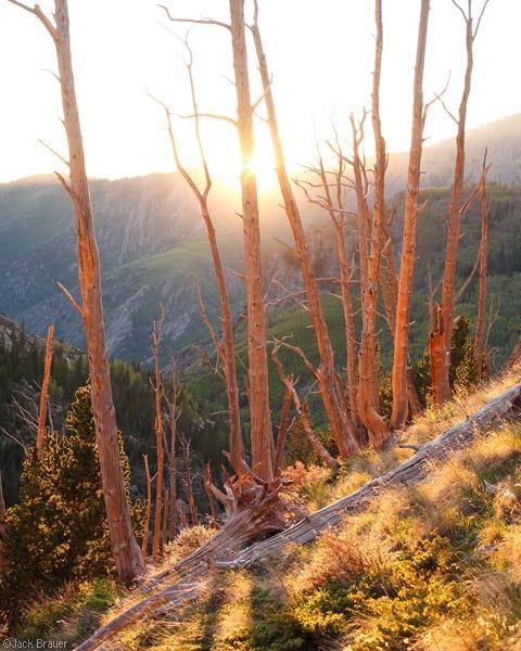 Sangre de Cristo, Colorado, North Crestone, sunset, June