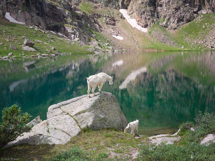 mountain goat, San Juan Mountains, Colorado, Sunlight Lake