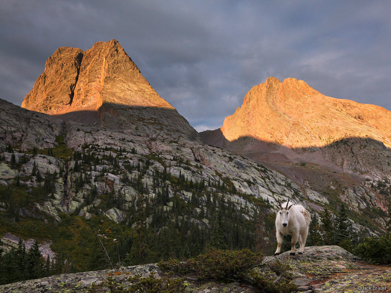 Mountain goat, Grenadier Range, San Juan Mountains, Weminuche Wilderness, Colorado