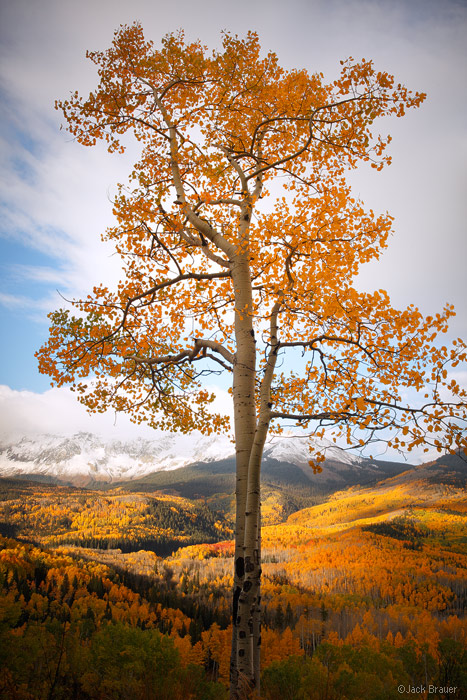 Aspen, San Juan Mountains, Colorado