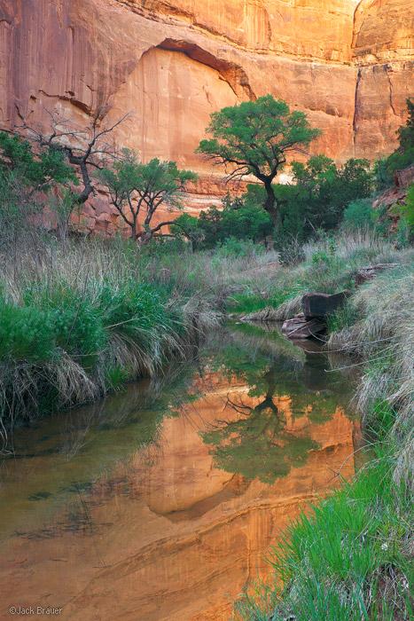 Owl Creek Canyon, Cedar Mesa, Utah, cottonwood, reflection