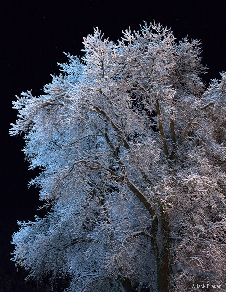 Ouray, Colorado, frosty, tree, October, snow
