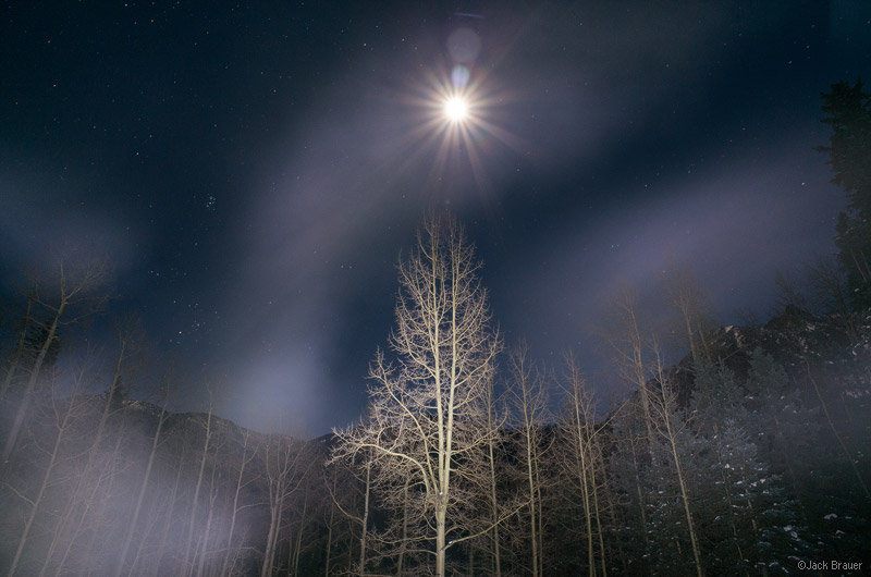aspen, moonlight, Sneffels Range, San Juan Mountains, Colorado, December