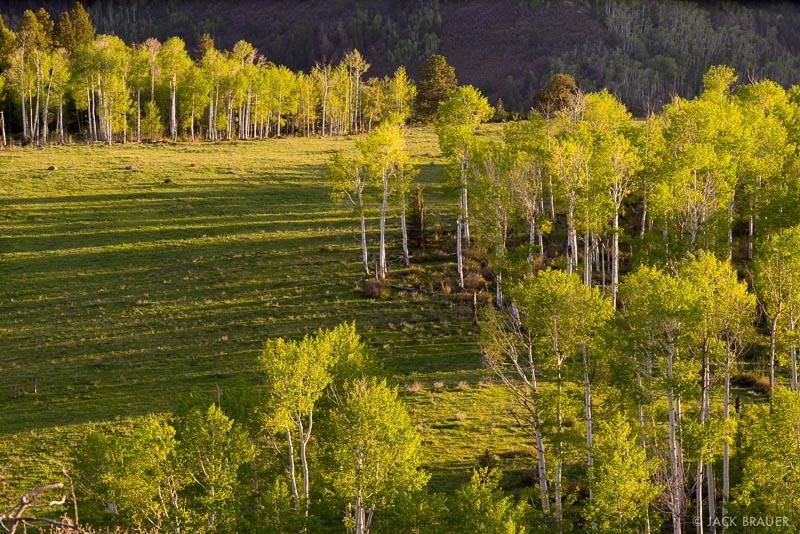 Colorado,San Juan Mountains,Sneffels Range, aspens, spring, sunset