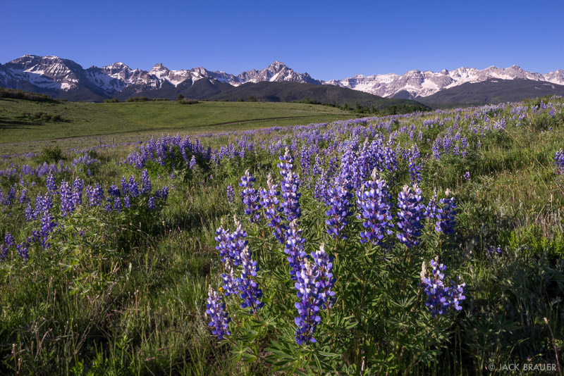 Colorado,San Juan Mountains,Sneffels Range, lupine, wildflowers, June