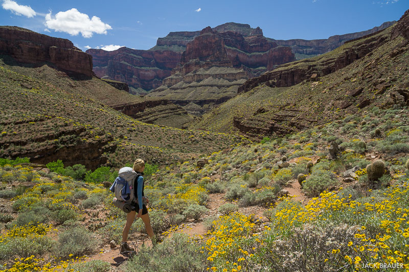 Arizona, Grand Canyon, wildflowers, hiking