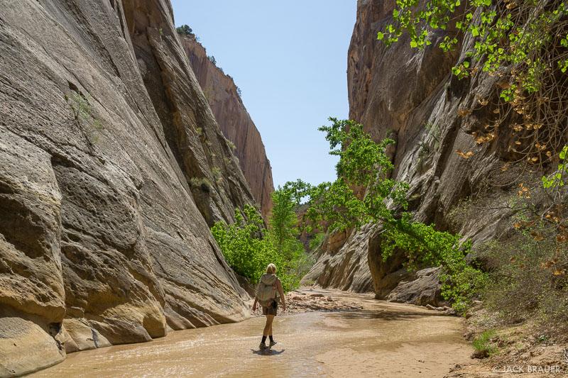 Hackberry Canyon,Utah, Cockscomb, hiking