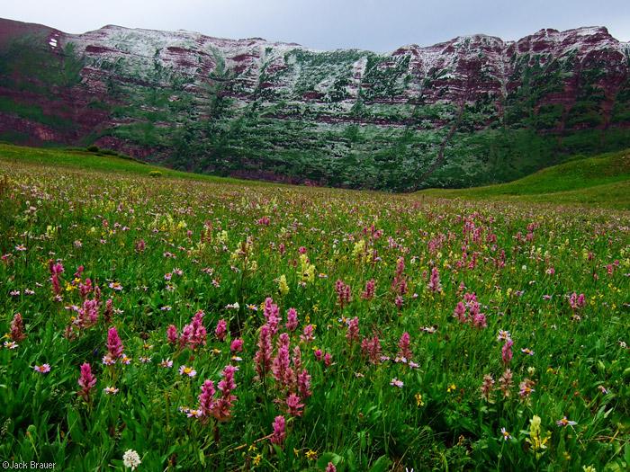 Hail, Wildflowers, Elk Mountains, Colorado, Maroon Bells-Snowmass Wilderness, photo