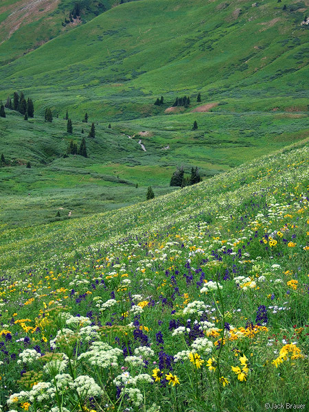 Wildflowers, Elk Mountains, Colorado, Maroon Bells-Snowmass Wilderness, photo