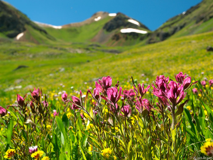 Wildflowers, San Juan Mountains, Colorado, photo