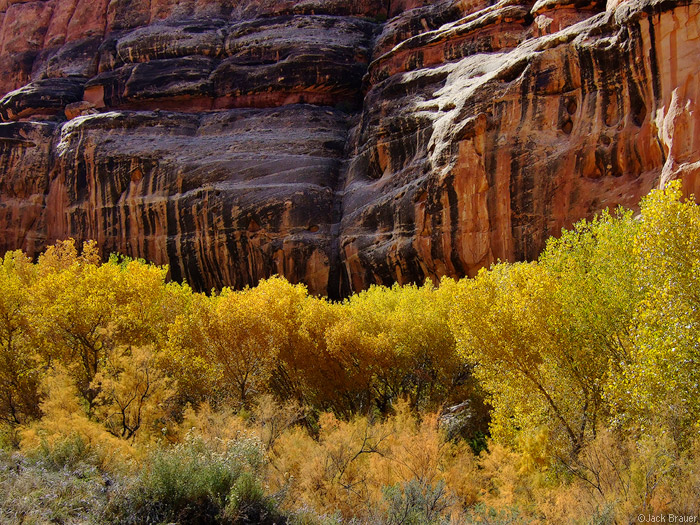 Grand Gulch, autumn, Bears Ears National Monument, photo