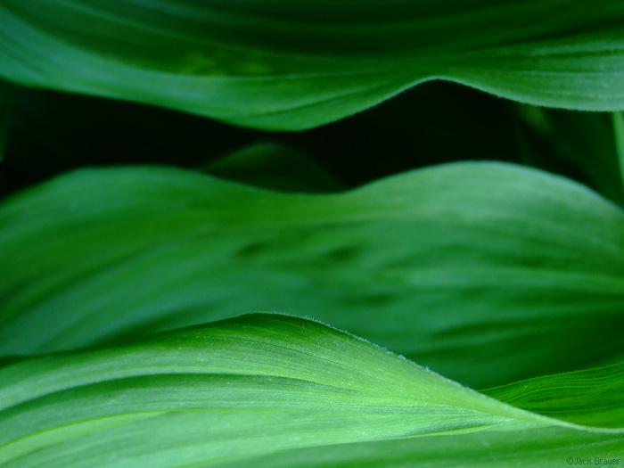 green, photo