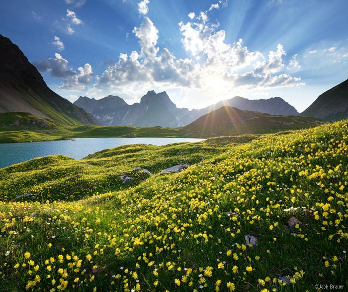 Lechtal Alps, Austria, wildflowers, Memminger Hütte