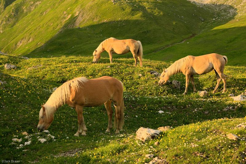 Lechtal Alps, Austria, Memminger Hütte, horses