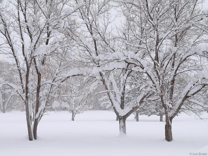 Midway, Utah, snowy, photo