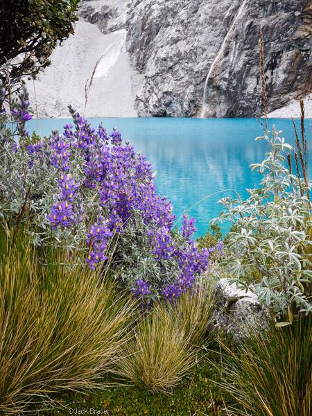 Lupine, Laguna 69, Cordillera Blanca, Peru, photo