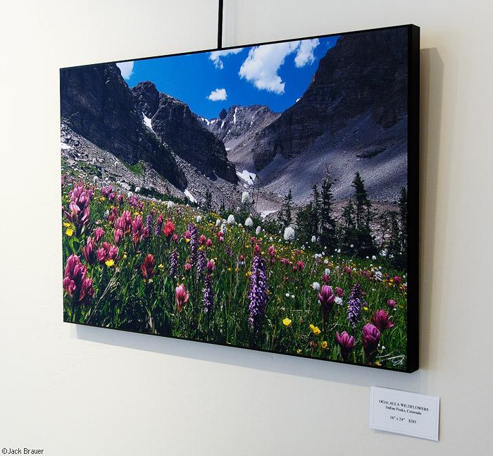 Ogalalla Flowers, print, photo