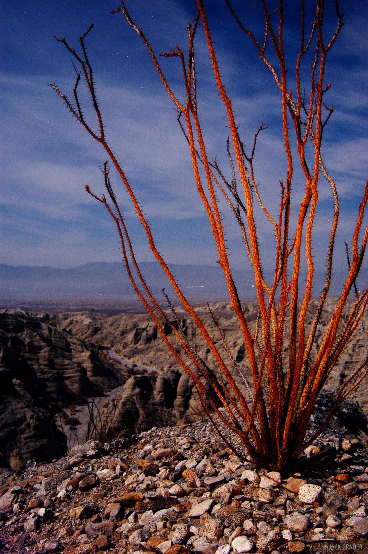 ocotillo, moonlight, Anza Borrego Desert, California, photo