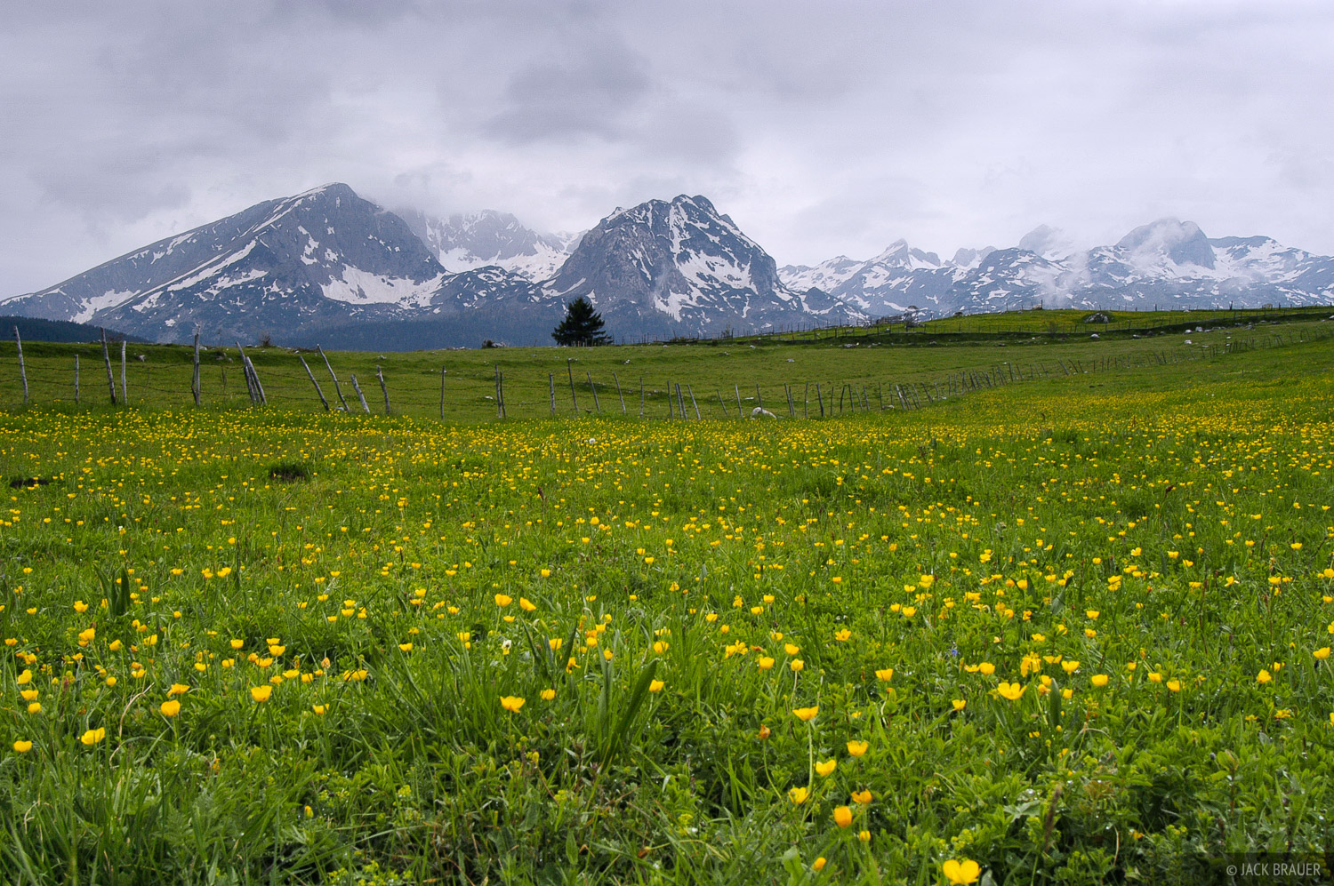 Wildflowers below Savin  Kuk (2313 m) and Medjed (2287 m) - June