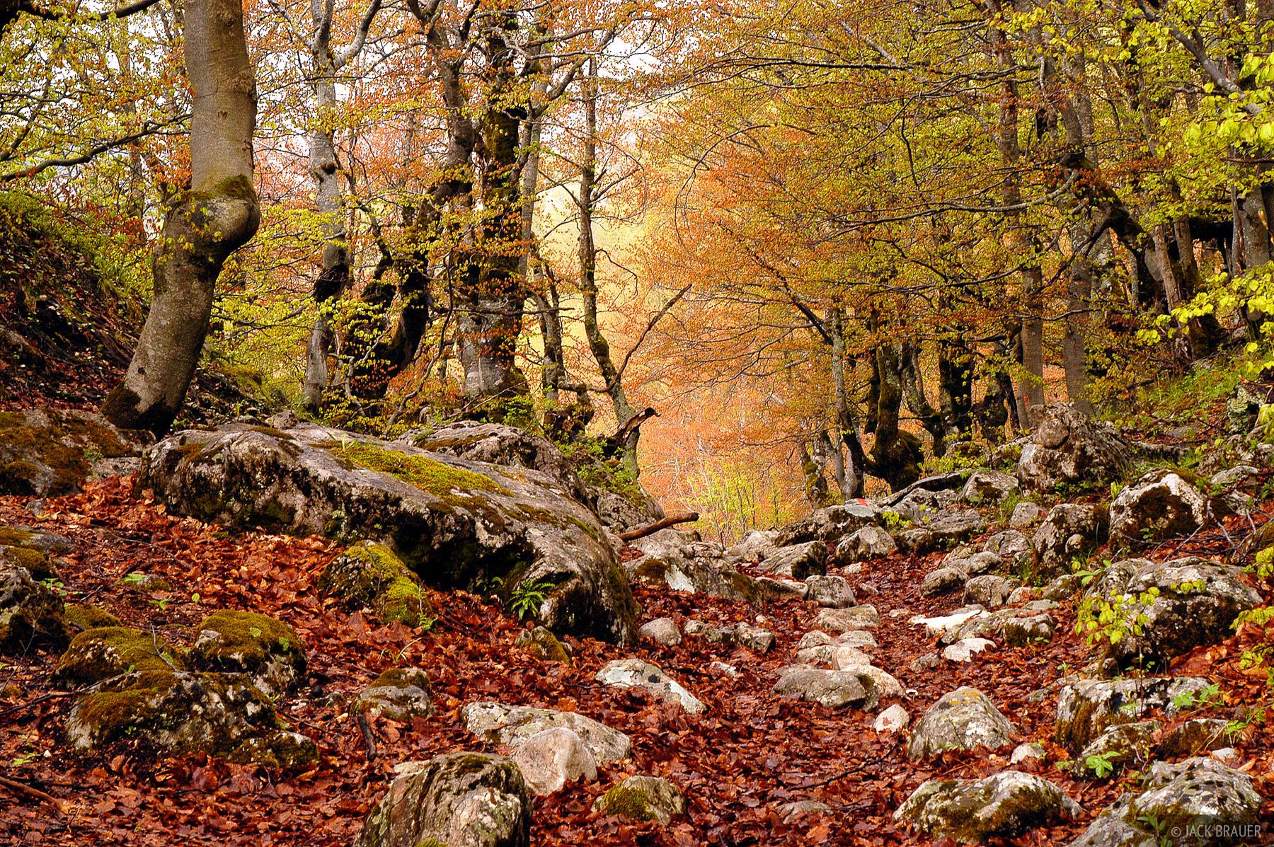 forest, Bobotov Kuk, Durmitor National Park, Montenegro, photo