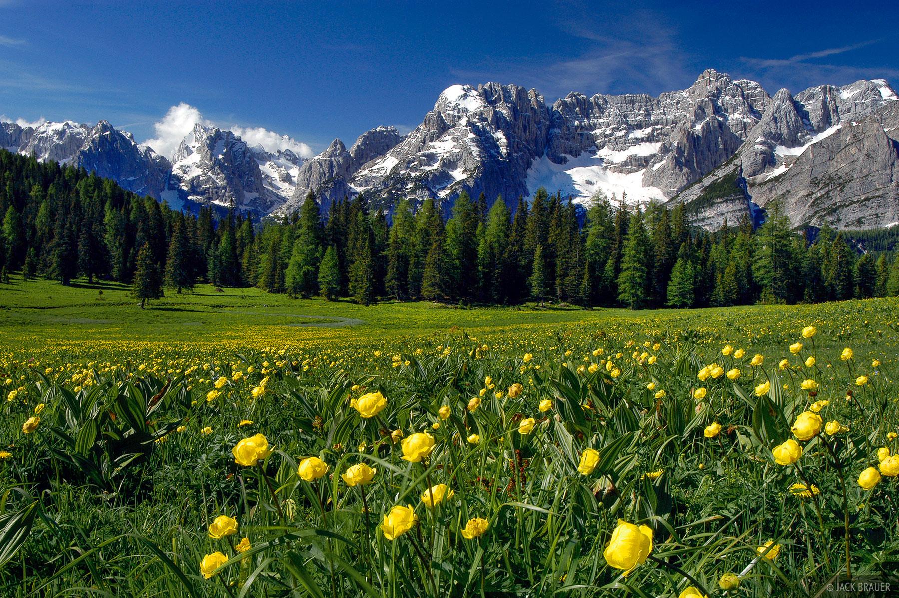 wildflowers, Sorapis, Lago Misurina, Dolomites, Italy, photo