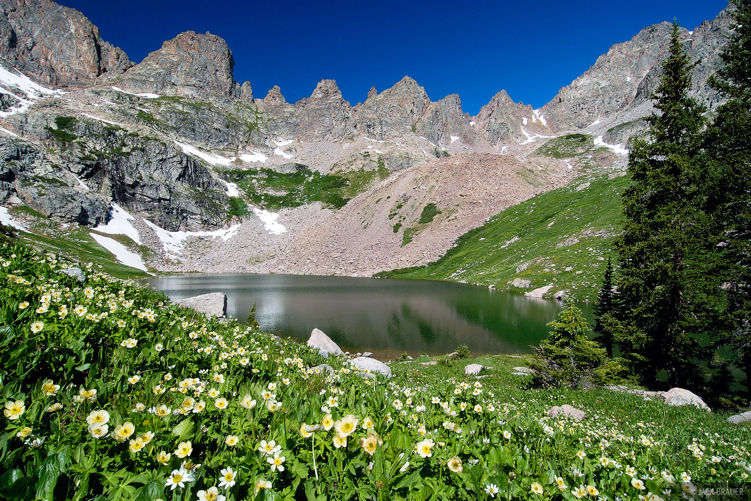 Willow Lakes, wildflowers, Eagles Nest Wilderness, Gore Range, Colorado, photo