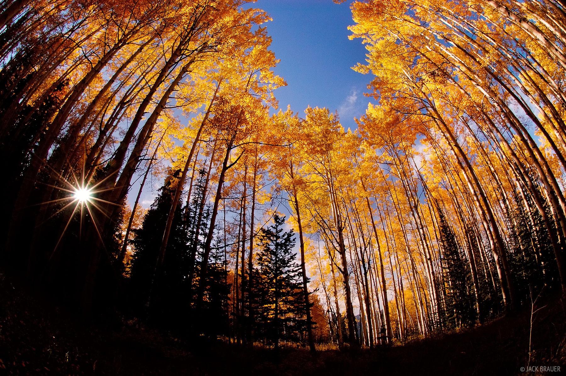 McClure Pass, aspen, fisheye, Colorado, photo