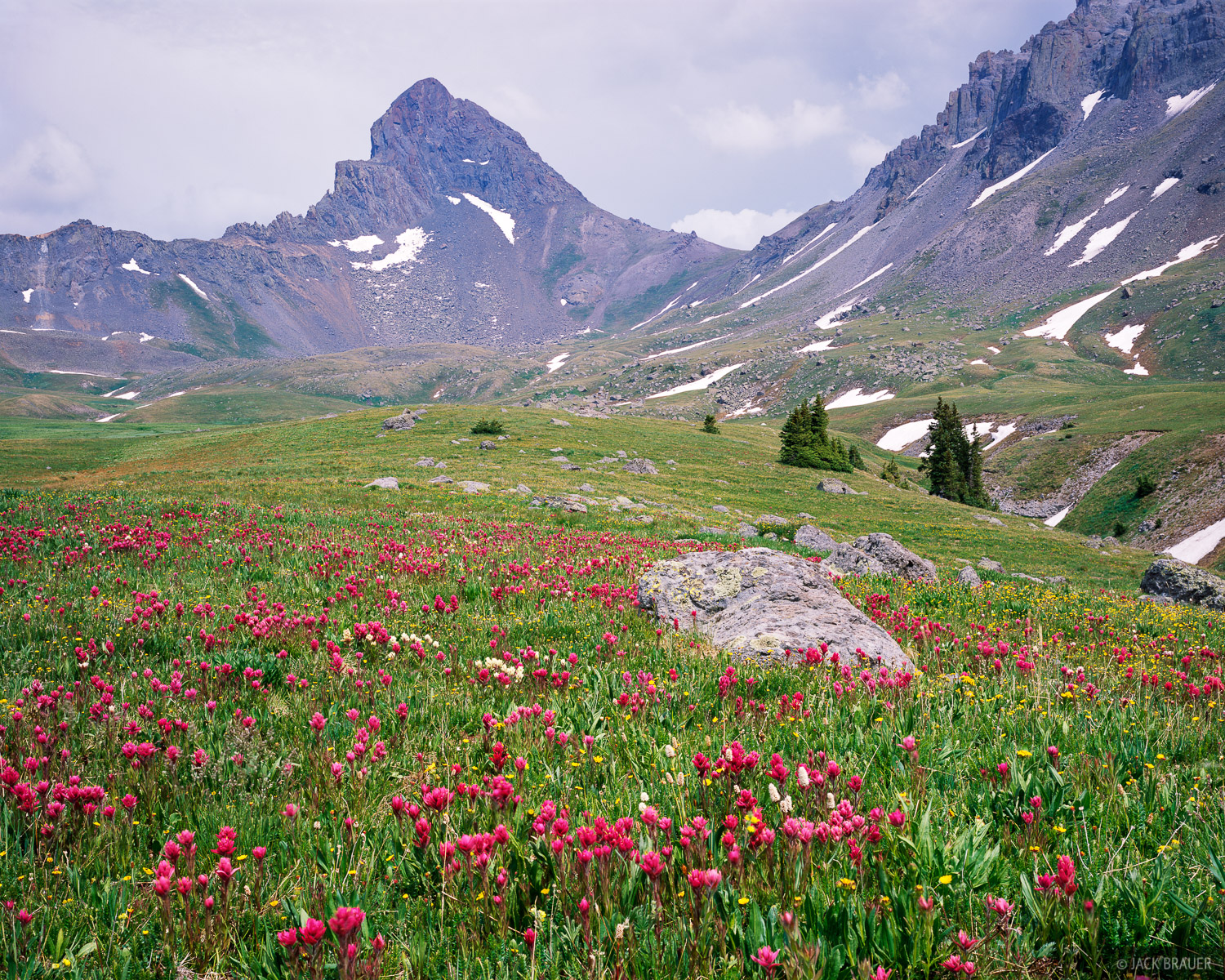 wildflowers, Wetterhorn Peak, Uncompahgre Wilderness, San Juan Mountains, Colorado, photo