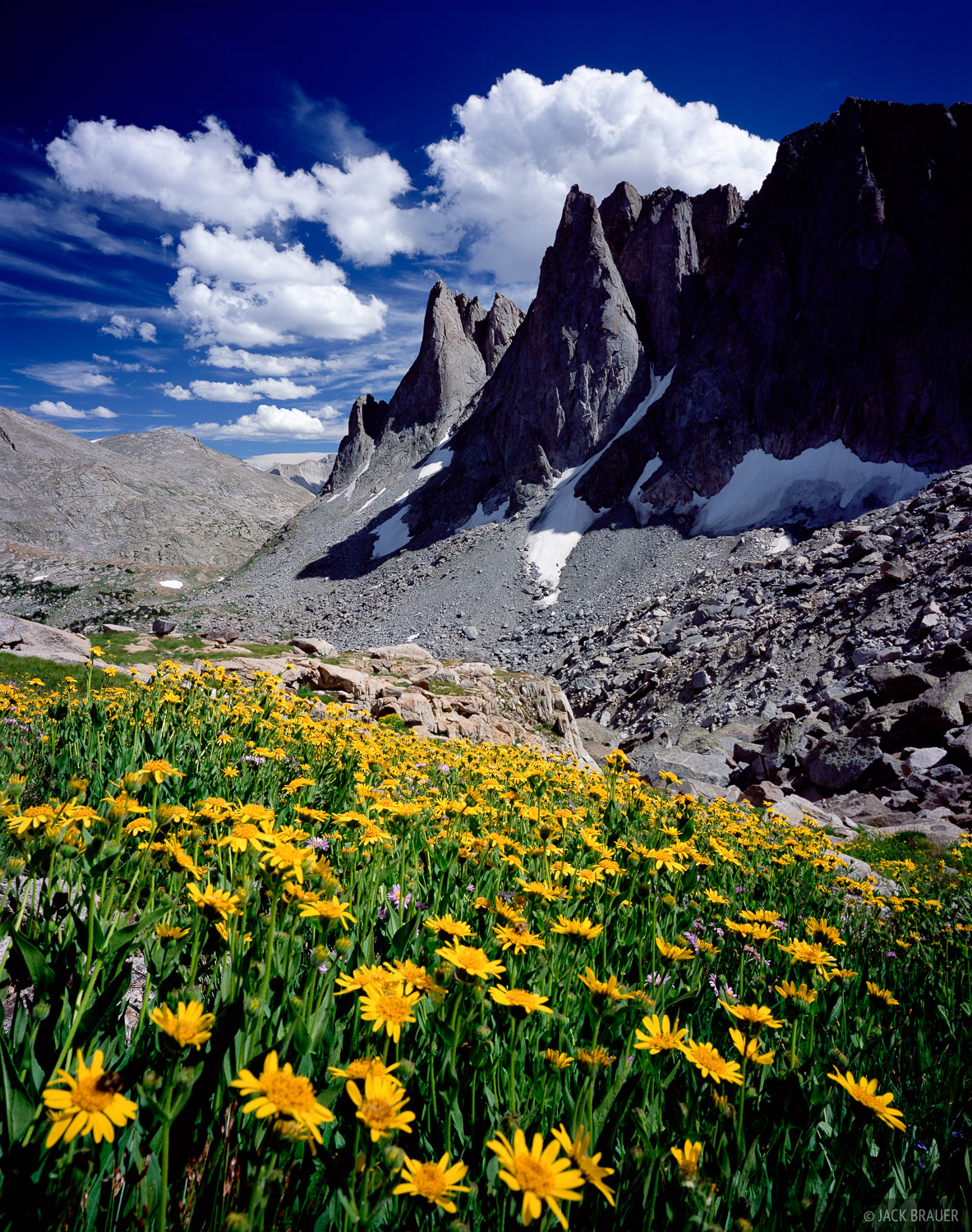 yellow flowers and Warbonnet Peak, Cirque of the Towers - August