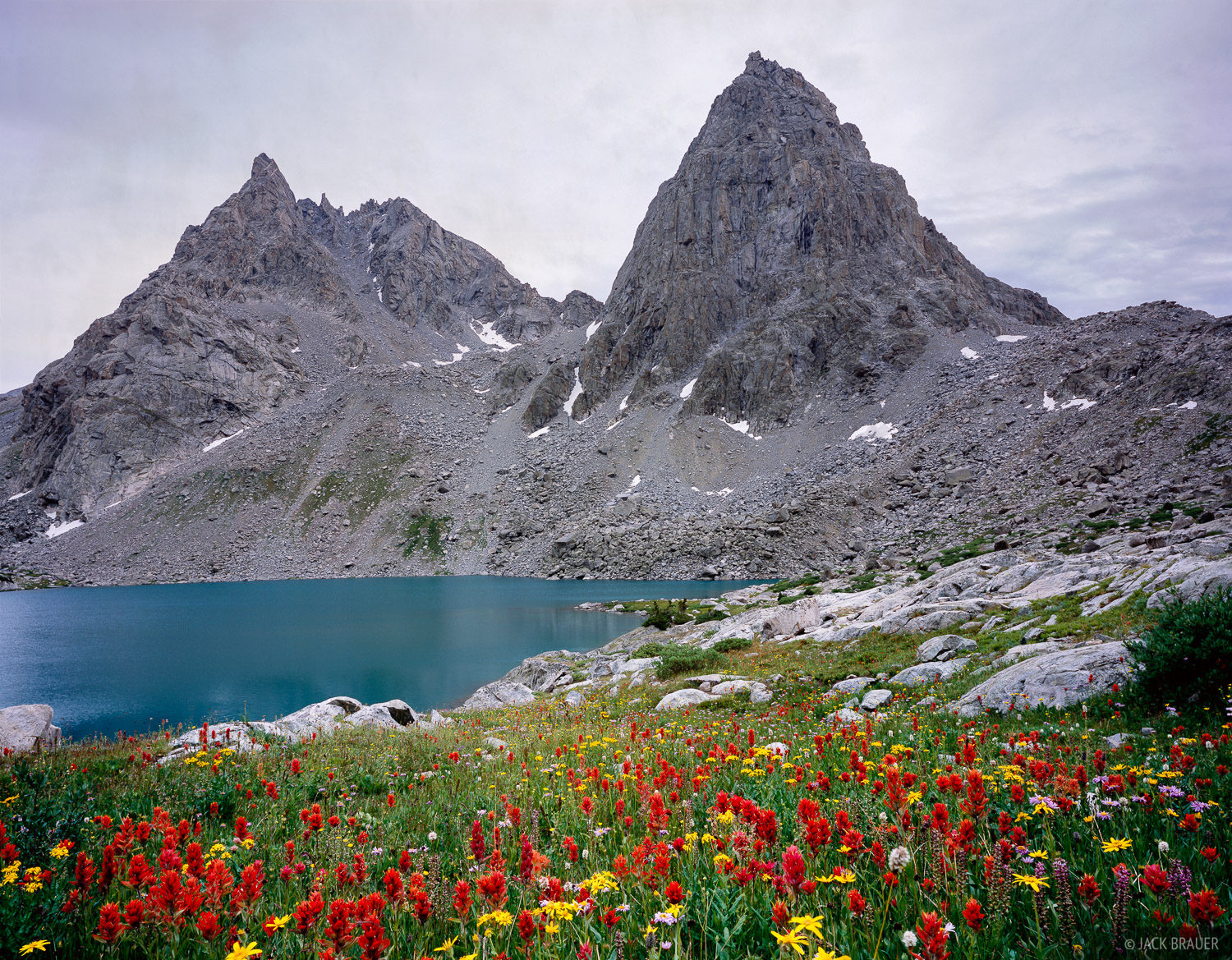 wildflowers, Peak Lake, Stroud Peak, Wind River Range, Wyoming, photo