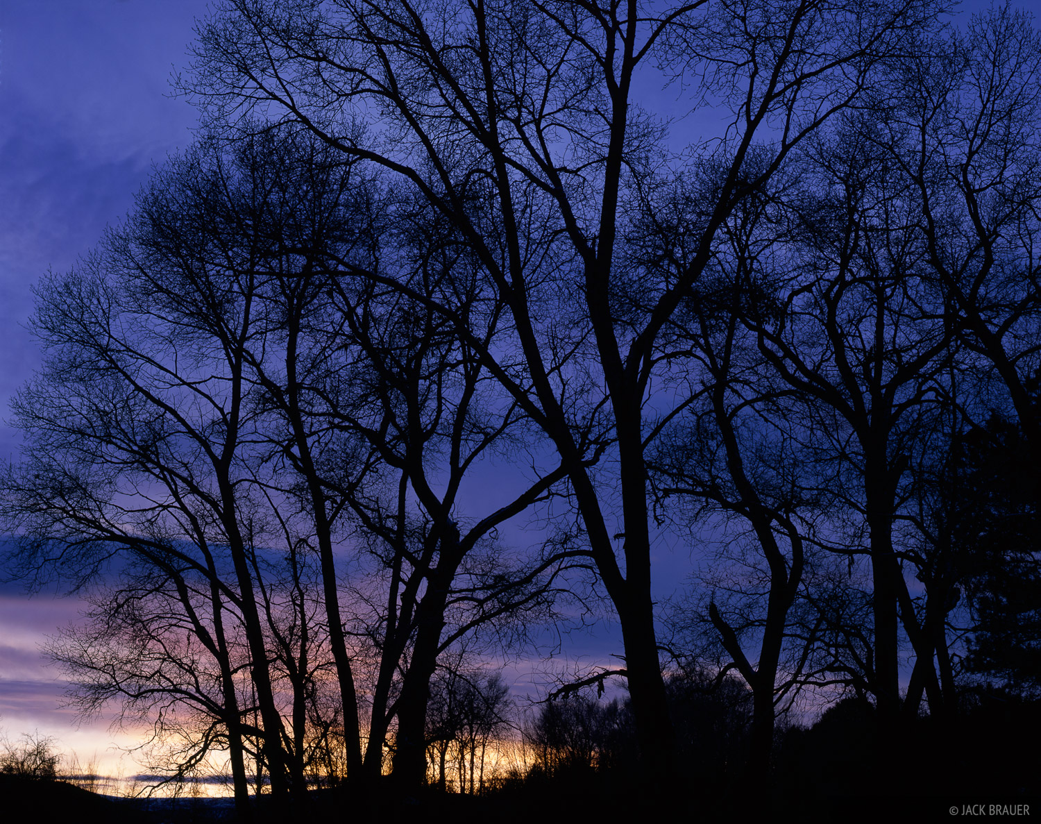 Cottonwood, silhouette, Ridgway, Colorado, photo