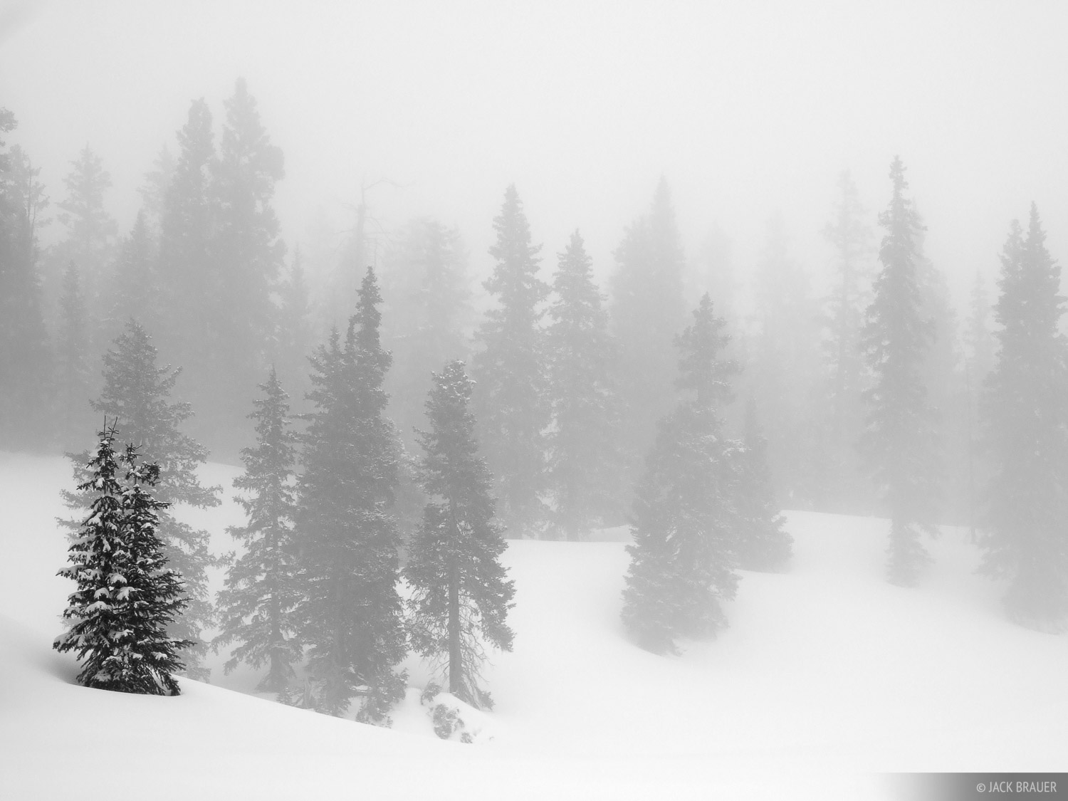 misty, forest, trees, Colorado, photo